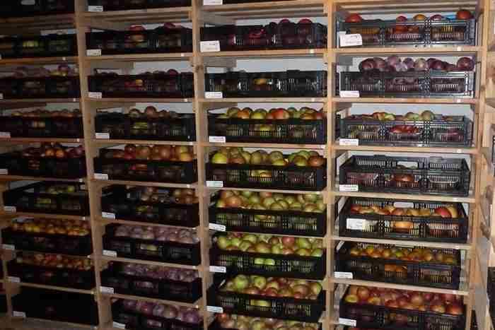 Хранение яблочного вина в домашних условиях